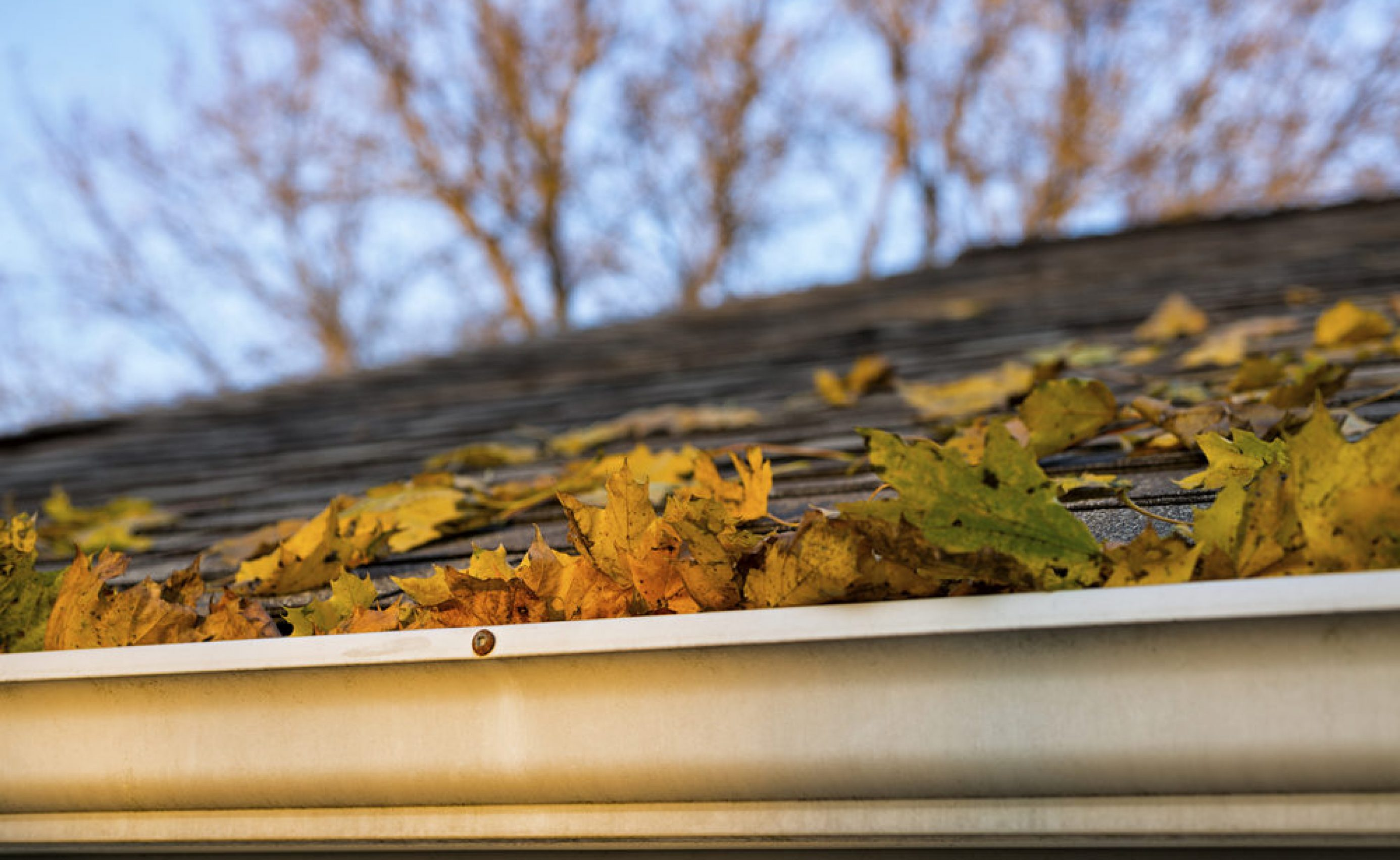 Autumn Leaves in the Gutter and on a shingled roof of a house.